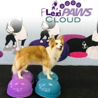 FlexiPAWS® Cloud
