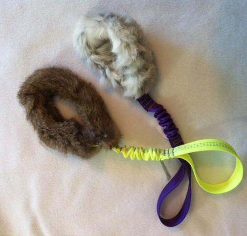 Bungee Bunny Loop